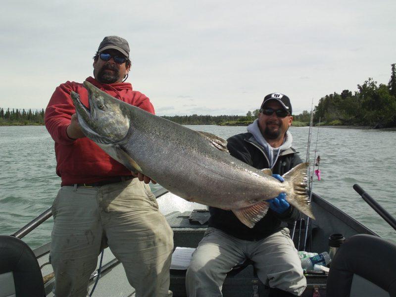 Kenai River King Salmon